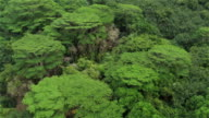 AERIAL: Flying over lush rainforest and colourful canoes on jungle river shore video