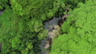 AERIAL: Flying over magnificent jungle canopies and beautiful curving river video