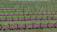 flying over rows and then Really high Aerial Wine to Market or Farm to Market in Austin Texas video