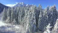 AERIAL: Flying over snowy forest towards the mountains video