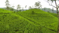 AERIAL: Flying over tea plantage video