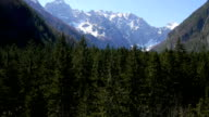 AERIAL: Flying over the spruce forest in mountains video