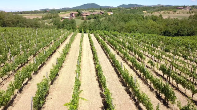 Flying over vineyard in Piedmont - Italy video