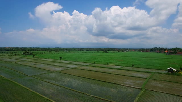 Flying over wet rice field terrace and indonesian village in daylight. Bali, Indonesia video