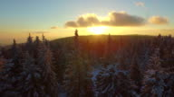 AERIAL: Flying over winter forest at sunrise video