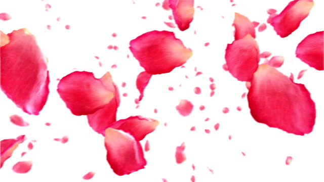 Flying rose petals on white. HD 1080. Looped animation. video