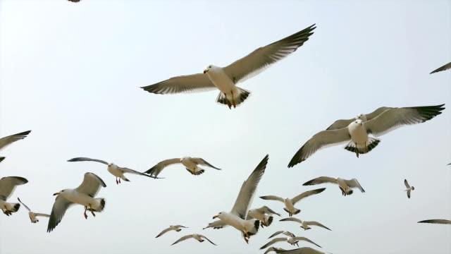 flying seagulls video