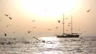 Flying Seagulls with a sailboat video