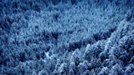 Flying Slowly Over Snowy Forest Valley video