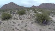 Flying through cactus desert video