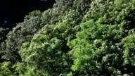 Flying through green forest video