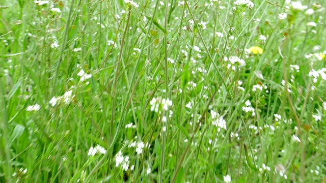 Flying through green grass and wildflowers video