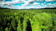 Flyover Boreal Forest video