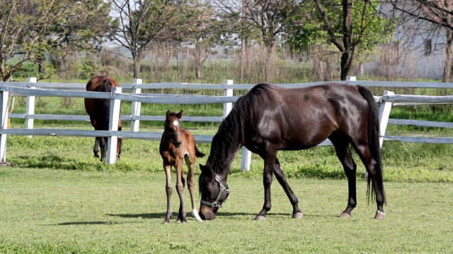 foal and horses on ranch video