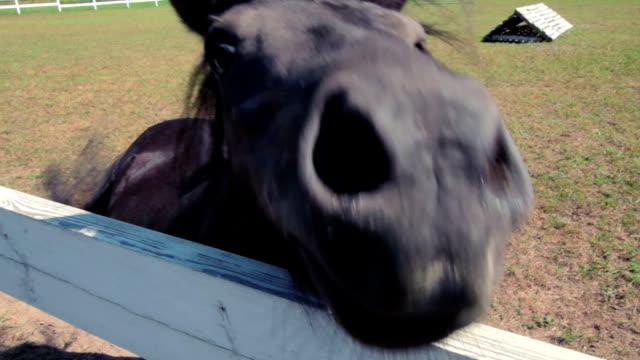 Foal in the paddock video