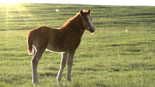 Foal in the Sun video