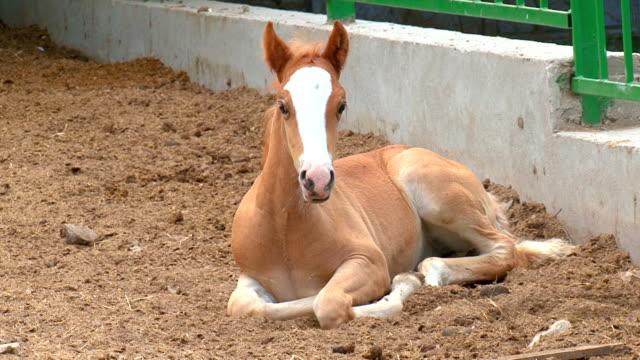 foal on the farm video