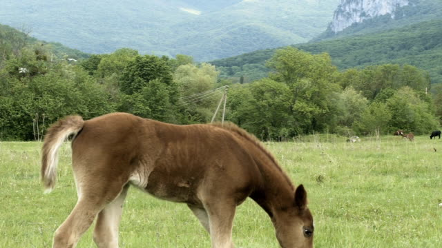 Foal Playing In A Meadow video