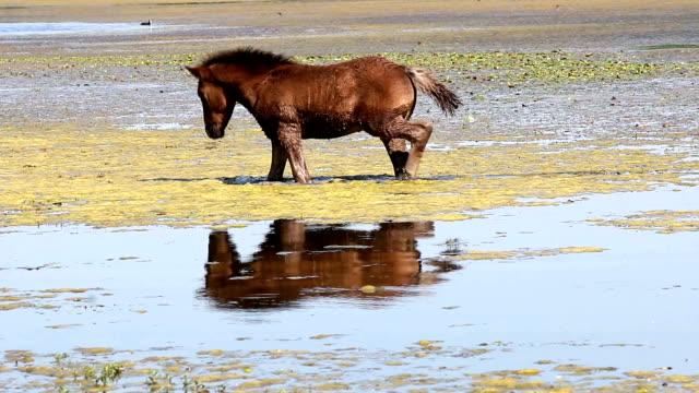 foal standing in water video