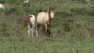Foal Suckling video