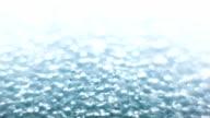 Foam plastic macro. video