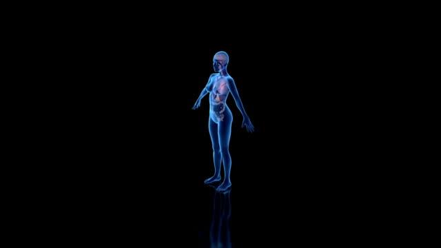 Focus on Female Anatomy video