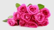Focus on pink roses as a gift video