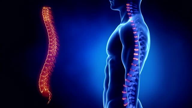 Focused on spinal INTERVERTEBRAL discs in loop video