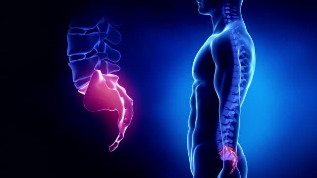 Focused on spine SACRAL region in loop video