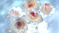 Focusing on artificial roses bouquet video
