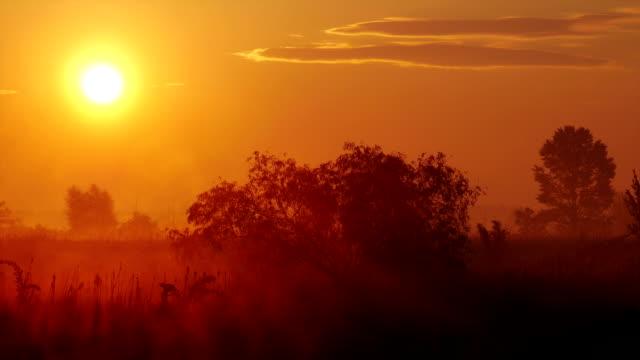 Fog At Sunset 1 video