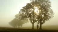 Fog moves through trees at sunrise, timelapse video