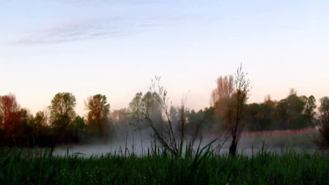 Fog on  meadow. Morning time lapse video