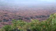Fog on Napa Vineyard video