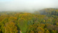 AERIAL Foggy Autumn Forest video