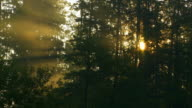 HD Foggy Forest in Sunlight (Time Lapse) video