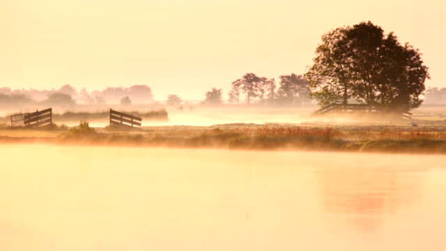 Foggy landscape at sunrise, just north of Amsterdam, The Netherlands video