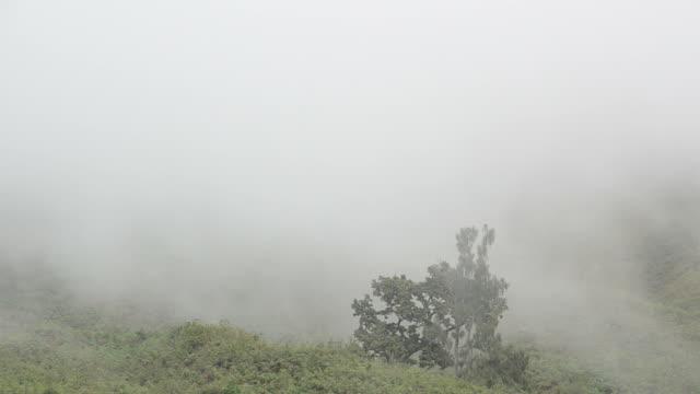 Foggy mountain video