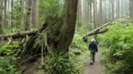 Foggy temperate rainforest hiker Olympic National Park video