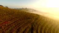 AERIAL Foggy Vineyard video