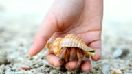 follow: big Hermit crab comes back to nature video