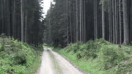 AERIAL Following the forest road amongst spruce trees video