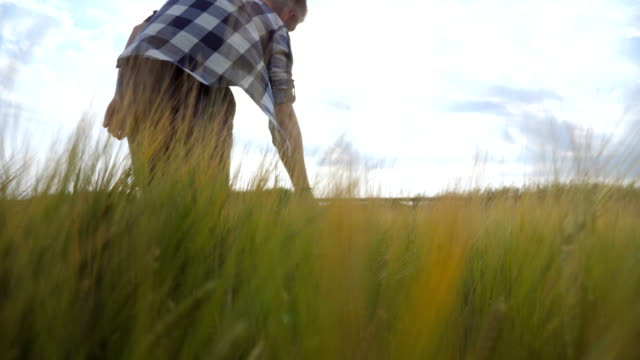 Following to male hand moving over wheat growing on the field. Meadow of green grain and man's arm touching seed in summer. Guy walking through cereal field. Close up video