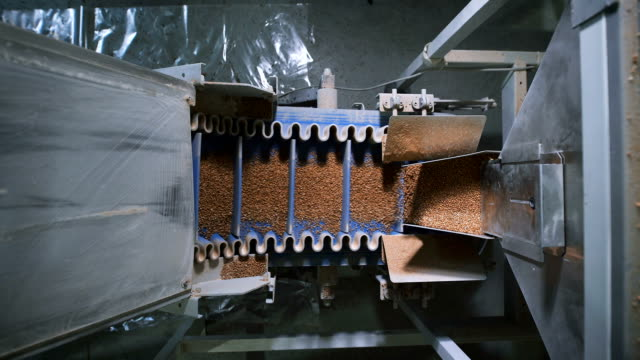 Food industry. Special automatic machine pours on the same portion of buckwheat video