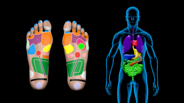 Foot Reflexology at a Human Body video