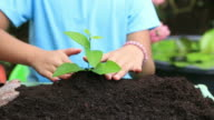 HD footage close up Child Hands Planting a Seed in Ground video