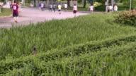 4K footage : Lung of Bangkok , Lumphini park , Thailand video