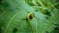 4K footage of ferns in this tropical. Thai jungle. video