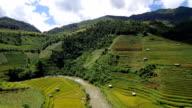 Footage Planing of Terraced rice field in high season at Mu Cang Chai, Yen Bai province, Vietnam video