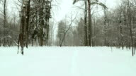 Footpath in the winter forest. Used professional gimbal stabilazer. video